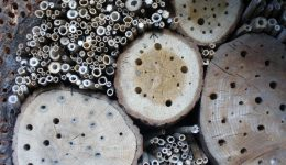 insect-hotel-259640_1920